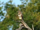 BUSE VARIABLE1600605